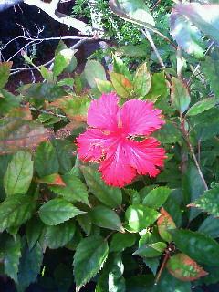 沖縄写真4.jpg